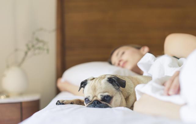 Un compañero de vida: nuestro compromiso con las mascotas